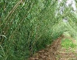 """SULCIS, Locci (Forza Italia): """"Sì al Carignano, no al Biofuel. Si deve puntare sul potenziamento dell'agricoltura"""""""