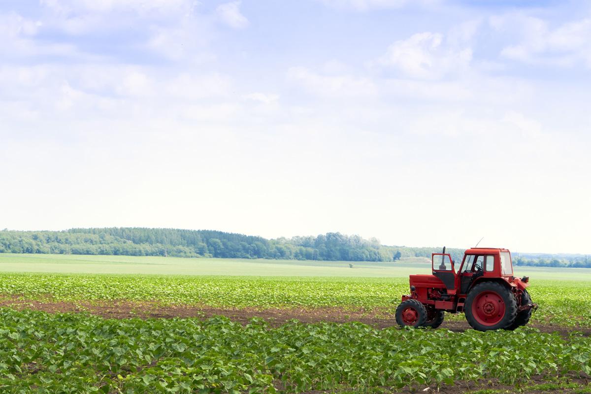 """AGRICOLTURA, Coldiretti: """"Microcredito passo verso seria politica creditizia"""". Arbau (Sardegna vera): """"Boccata d'ossigeno per mondo agricolo"""""""