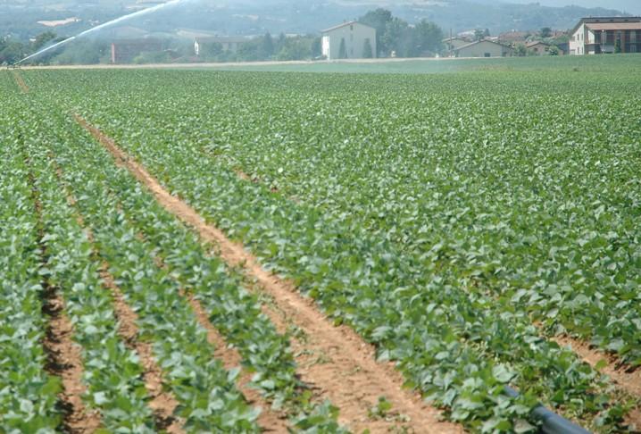 """AGRICOLTURA, Pittalis (FI): """"Con l'Imu, Governo continua a rapinare i Sardi"""". Rubiu (Area popolare): """"Regione impugni il decreto"""""""