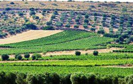 AGRICOLTURA, La Regione avvia il monitoraggio del territorio per tutelare le colture