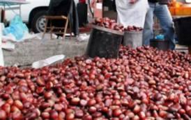 """ARITZO, Al via la Sagra della castagne e delle nocciole. Sindaco Mameli: """"Bosco e suoi prodotti hanno importanza fondamentale"""""""
