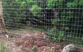 BAUNEI, Altopiano del Golgo: recinzione nei terreni a uso civico provoca danni alla fauna selvatica