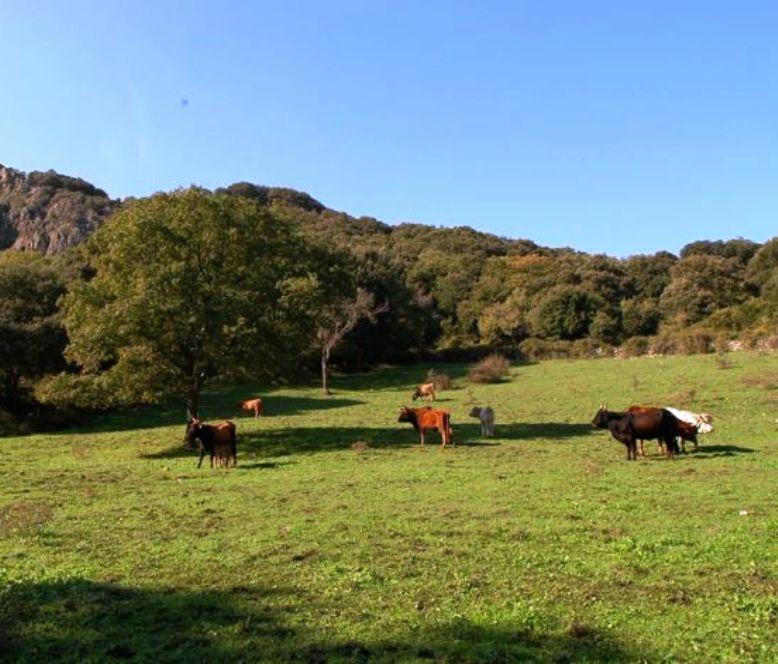 AGRICOLTURA, Archiviato pericolo 'blue tongue': via libera dal Ministero alla movimentazione dei bovini dalla Sardegna