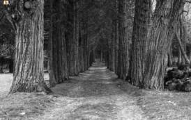 STINTINO, Una passeggiata letteraria tra boschi e foreste con il libro di Giambattista Fressura