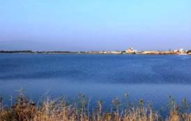 PESCA, Servono nuove misure e stanziamenti per contrastare invasione cormorani negli stagni di Cabras e Marceddì