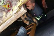 CAGLIARI, Finisce in un fossato in via Bainsizza: cane recuperato dai Vigili del Fuoco
