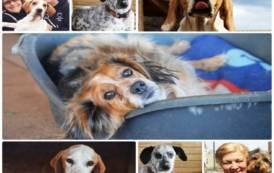 "GONNOSFANADIGA, Appello dal rifugio per cani: ""Aiutate i nostri 300 ospiti"""