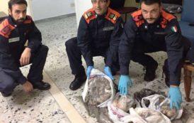 PESCA, Sequestrati 15 chili di prodotti ittico pescati e commercializzati illegalmente