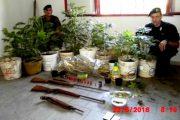 BARISARDO, Arrestato pregiudicato: coltivava marijuana e possedeva armi e munizioni