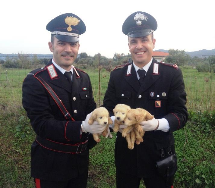 PERDAXIUS, I Carabinieri salvano tre cuccioli di pastore maremmano