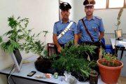 TORTOLI', Coltivavano canapa ed avevano dosi di cocaina e marijuana: denunciati tre giovani