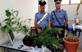 TORTOLI', Coltivava canapa indiana in casa: arrestato 46enne