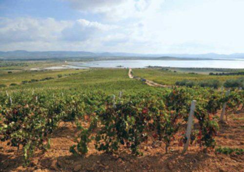 """SULCIS, Strade del vino. Locci (FI): """"La Regione assicuri il sostegno ai progetti di promozione"""""""