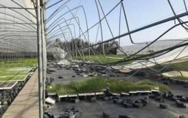 DECIMOPUTZU, Serre distrutte dalla tromba d'aria: la Regione aiuti le aziende colpite