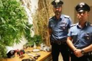 GUSPINI, Piante di canapa, marijuana e munizioni in casa: arrestato 50enne