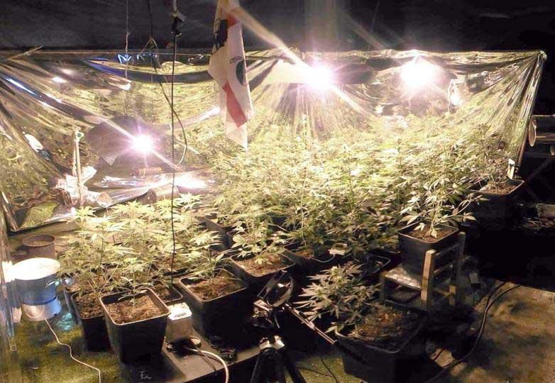 SAN GIOVANNI SUERGIU, Appartamento come serra per coltivare cannabis e centrale di spaccio: arrestato 24enne