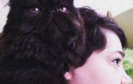 Un'empatia 'magica' tra la gattina Dudu e Valentina (Dany Voltolina)