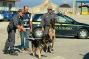 OLBIA, Da Civitavecchia con 2 etti di marijuana: arrestato nigeriano con permesso per motivi umanitari