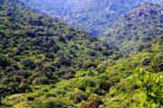"""FORESTAS, Le critiche del centrodestra alla riforma dell'Ente foreste: """"Penalizza lavoratori ed Enti locali"""""""