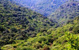Qualcuno spieghi ai Sardi la politica forestale della Regione (Il Giardiniere)