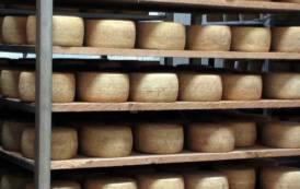 AGRICOLTURA, Trattato commerciale Europa-Giappone: formaggi sardi penalizzati da possibili 'tarocchi'