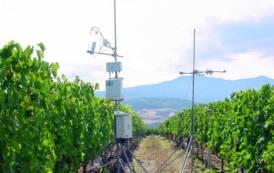 """RICERCA, Progetto""""Ga-vino"""": gestione innovativa e sostenibile della risorsa idrica nei vigneti"""