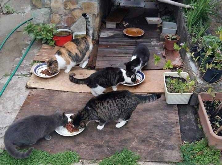 gatto_colonia3