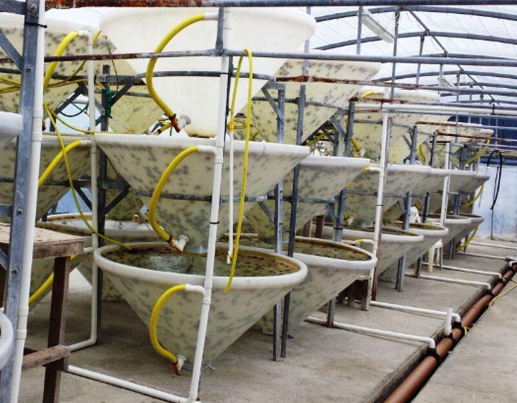 """CAGLIARI, Concluso il progetto """"Resurch"""" sull'allevamento del riccio di mare: sostenibilità e ripopolamento (VIDEO)"""