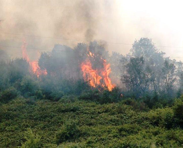 NUORO, Dal Brasile per studiare gli effetti degli incendi sul suolo. Accordo di programma tra Atenei