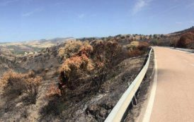 Incendi: queste immagini fanno capire perché bisogna essere inflessibili (Salvatore Deidda)