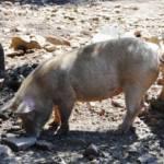 Logica veterocomunista: considerare sacra l'industria e pericolosi i pastori (Il Giardiniere)