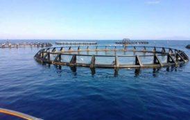 """MARICOLTURA, Rubiu (Udc): """"Manca la carta regionale, strumento per il rilancio del settore ittico"""""""