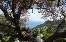 MARRUBIU, Ritrovato a Monte Arci il 41enne di Arborea scomparso