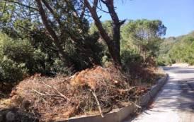 Cumuli secchi di frasche e rami: un pericolo per il Monte Ortobene (Salvaguardia Monte Ortobene)