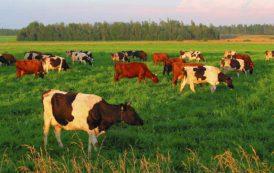 AGRICOLTURA, 200mila euro per combattare inquinamento dai nitrati delle fonti agricole