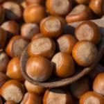 AGRICOLTURA, Produzione di nocciole per l'industria dolciaria: occasione per costruire filiere sarde