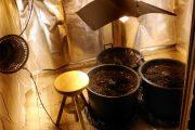 OLBIA, Coltivava marijuana in un appartamento del centro: arrestato 34enne
