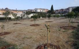 CAGLIARI, In via Biasi il primo orto condiviso, dedicato al pittore sardo: ulivi, agrumi e nespoli a disposizione dei cittadini