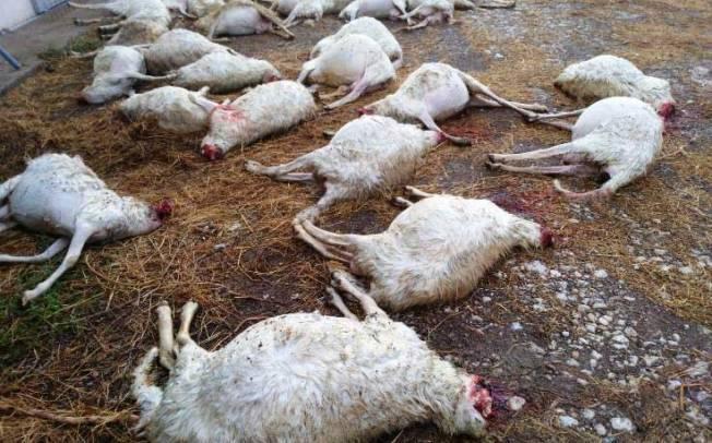 Taglia su chi avvelena i cani… e su volpi e randagi che sterminano greggi? (Il Giardiniere)