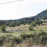 Pastorizia sarda in pericolo per un nuovo virus: Maedi Visna (Salvatore Espa)