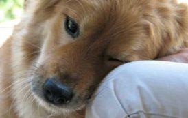 SANITÀ, Pet therapy cura ufficiale in Sardegna: benefici per pazienti e famiglie ed opportunità di lavoro
