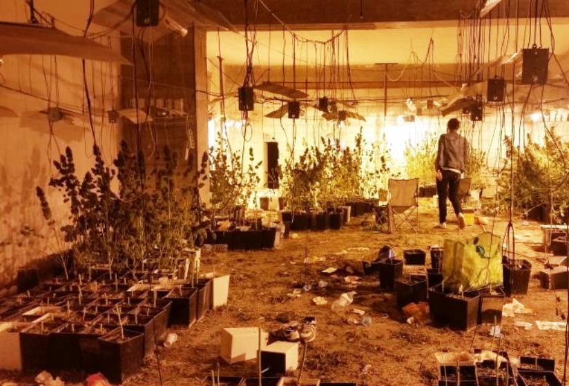 GONNESA, Arrestati otto cagliaritani che coltivavano 1.650 piante di cannabis in 800 mq. Sequestrate tre pistole e un fucile