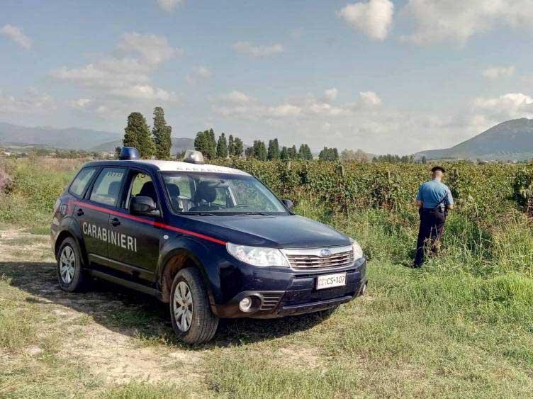 PISCINAS, Braccianti senza contratto impegnati nella raccolta dell'uva: multa di 6mila euro all'azienda agricola