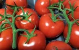 In agricoltura la Sardegna studi la lezione olandese (Il Giardiniere)