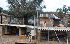 GONNOSFANADIGA, Soldi raccolti per curare Asia devoluti al rifugio degli animali abbandonati