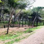 SASSARI, Atti vandalici nell'area cani del parco di Baddimanna
