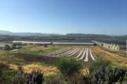 OZIERI, I terreni della truffa eolica erano destinati all'Azienda didattica della Facoltà di Veterinaria