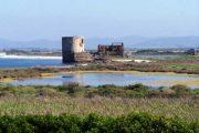 STINTINO, Progetto Life Sterna: l'oasi naturalistica delle Saline si ripopola delle 'specie target'