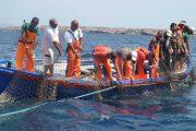 UNIVERSITA', Ricercatori cagliaritani studiano migrazioni del tonno di Carloforte con tecnologie satellitari