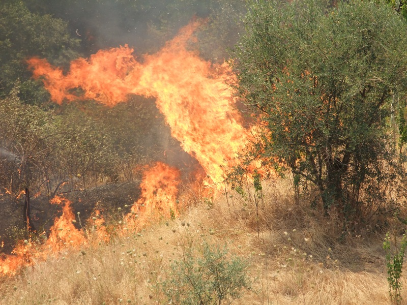 NUORESE, Notte di fuoco: incendi nelle campagne di Sarule e nella strada Bitti-Buddusò. Ad Ortueri a fuoco un'azienda agricola (VIDEO)